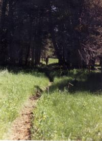 path_through_the_forest_no_fence_sm.jpg (11554 bytes)
